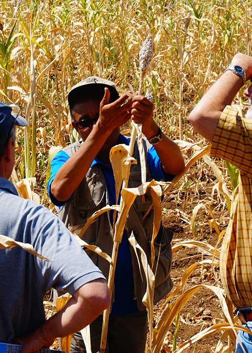 Team assessing crops